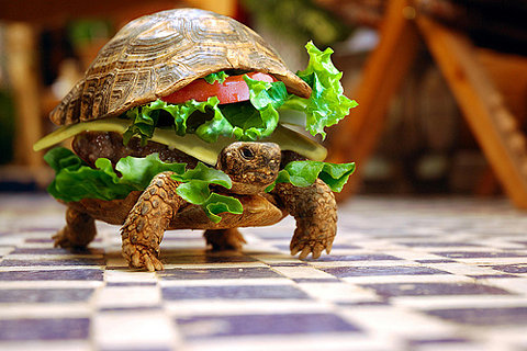 This turtle is a burger. Your argument is invalid.