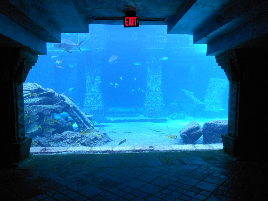 Atlantis Resort Bahamas Marine Habitats Loyalty Traveler
