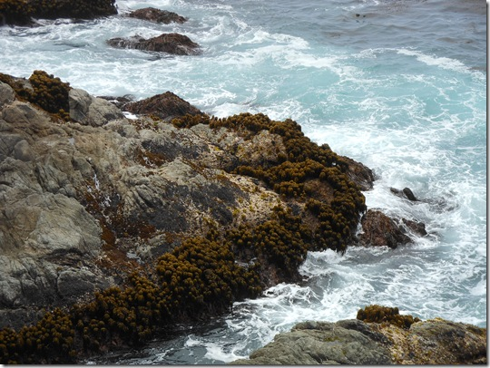 Garrapata Big Sur 156