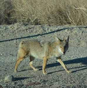 Death Valley Trick-ster-Treat