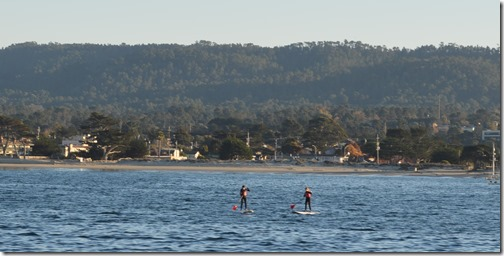 Paddle Boarders off Monterey