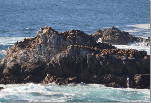 Sea lion rocks