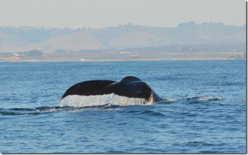 Whale Tail-2-CU