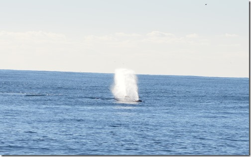 Whale blow-3