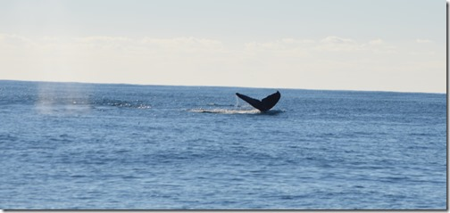 Whale tail-4