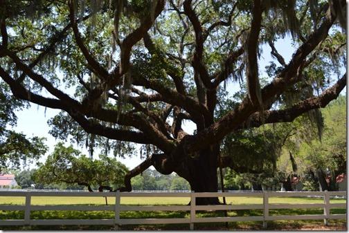 Old Oak White Hall Plantation