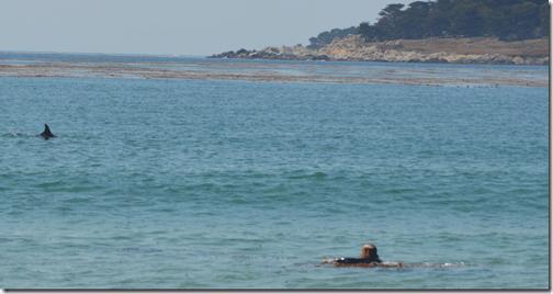 Carmel Beach dolphin