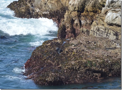 Sea otter on rocks