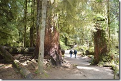 Cathedral Grove-1