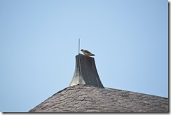 Biltmore Inn hawk-2