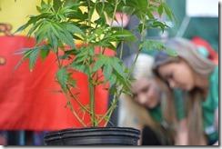 VAG plant