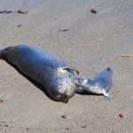 Seal-pup-1.jpg