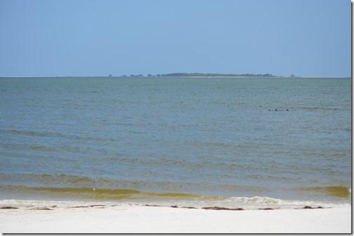 Carrabelle Beach dolphins