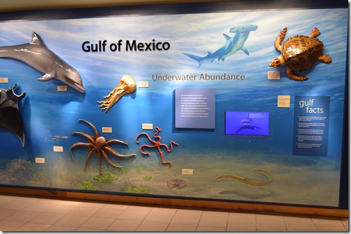 GINS Gulf of Mexico exhibit