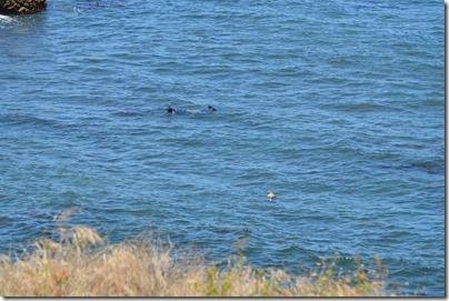snorkelers-seal