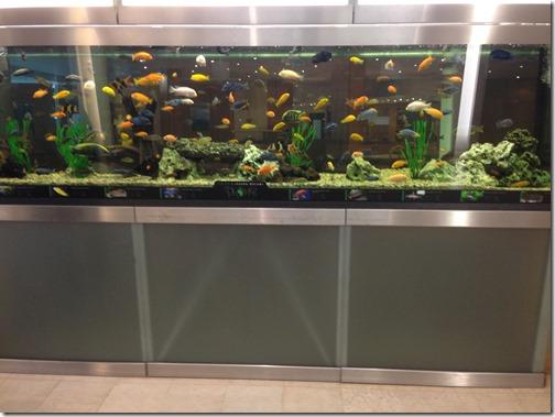 Brno HI aquarium