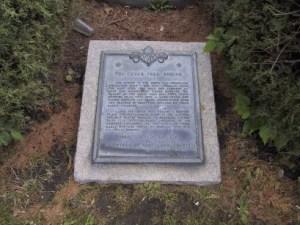 Cedar Tree Ground Plaque