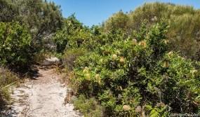 Henry Head Track, Kamay Botany Bay National Park