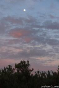Pennington Sky