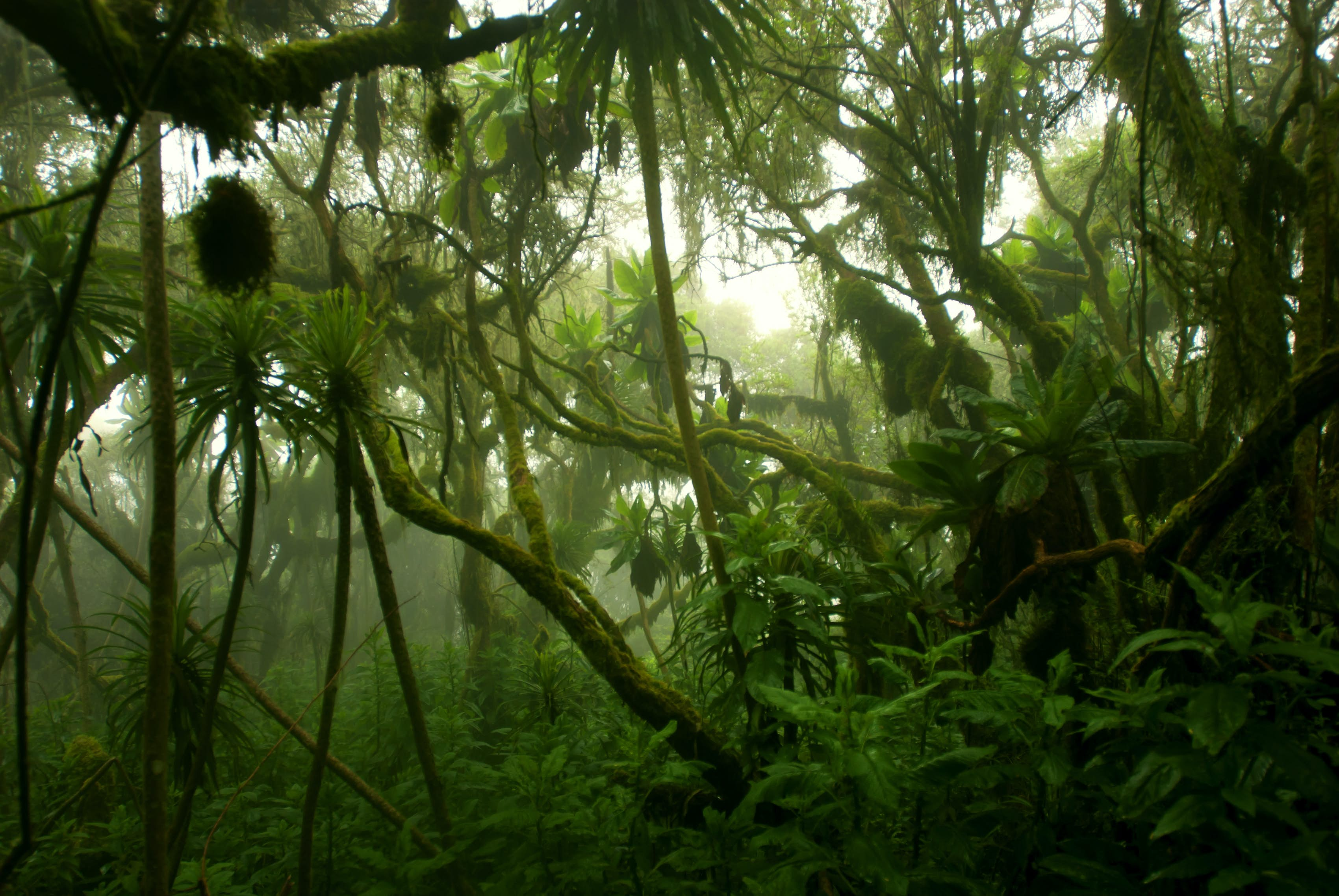 The congo rainforest is one of the best examples of mother nature at its finest, so it is quite concerning that the forest is being threatened with deforestation. Republic Of Congo Travel Africa Lonely Planet