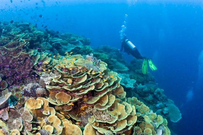 Features - Diver near coral reef