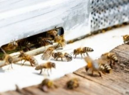What Makes a Beehive Aggressive?