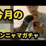【モンスト】今月のモン玉ガチャレベル5【なうしろ】[ゲーム実況byなうしろ]
