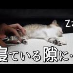 【愛猫日記】普段めちゃ嫌がる『爪切り』を爆睡している間にやってみた結果…#3【MOYA/モヤ】ステラ[ゲーム実況byMOYA GamesTV]