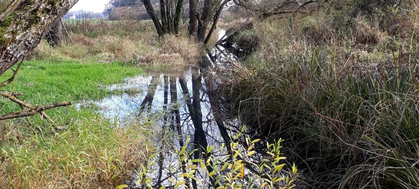 Ökologisches Grabenmanagement