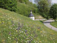 artenreiche Blumenwiese bei Stampfl