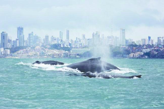 c1 baleias salvador.jpg