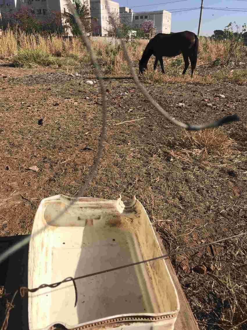 a4 Cavalos abandonados (5)