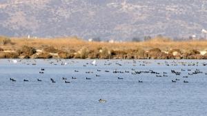 Климатический кризис сказался на месте обитания фламинго в Турции