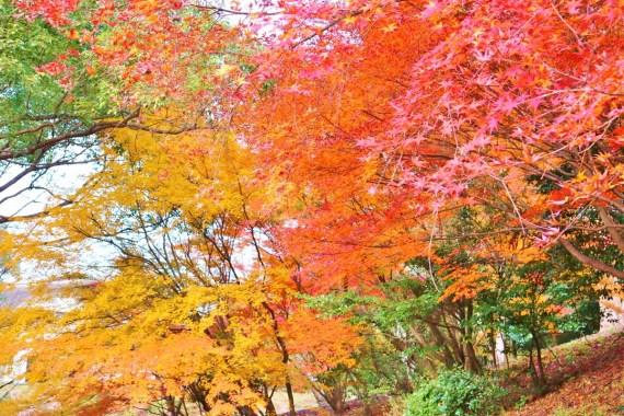Kinbuchi_Park (4)