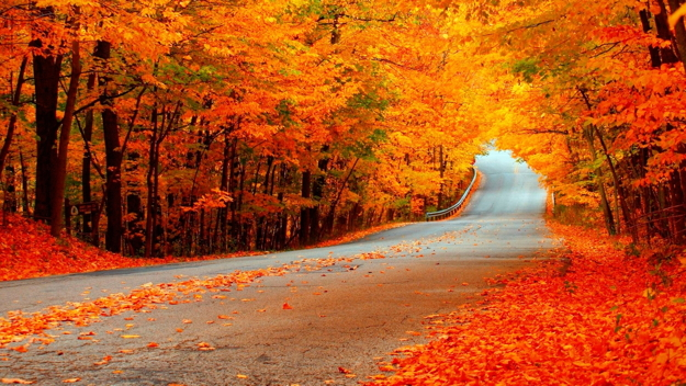 bright-autumn-road-popular-trees