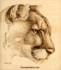 cougar-07