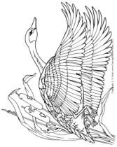 lsirish-goose-pattern
