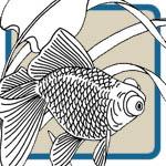 Goldfish Patterns
