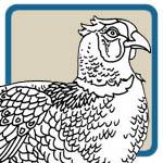 Ring neck pheasant, fox, and farm scene patterns by Lora S Irish