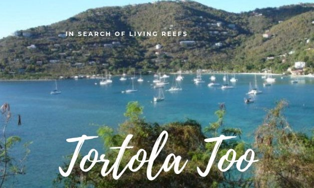 Tortola- 2009