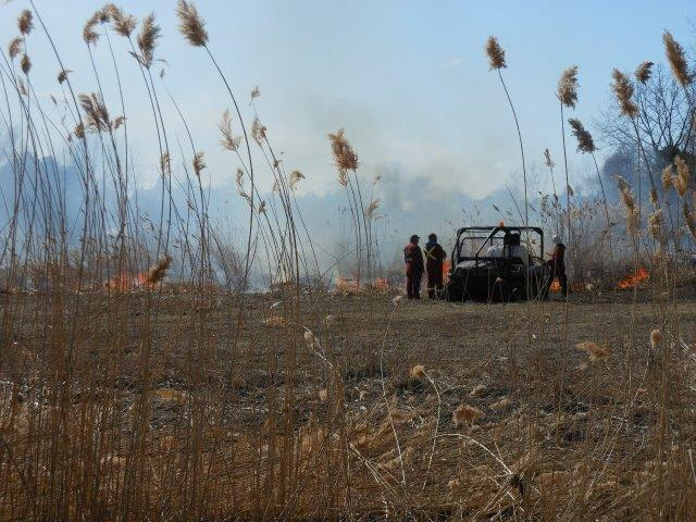 Port Franks controlled burn