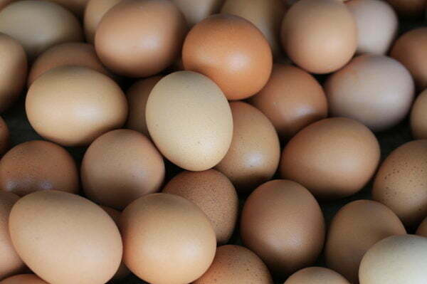 We are top supplier of Fresh Chicken Table Eggs Online. We also have Ostrich Eggs For Sale Online. Distributor of Bulk Table Chicken Eggs UK.