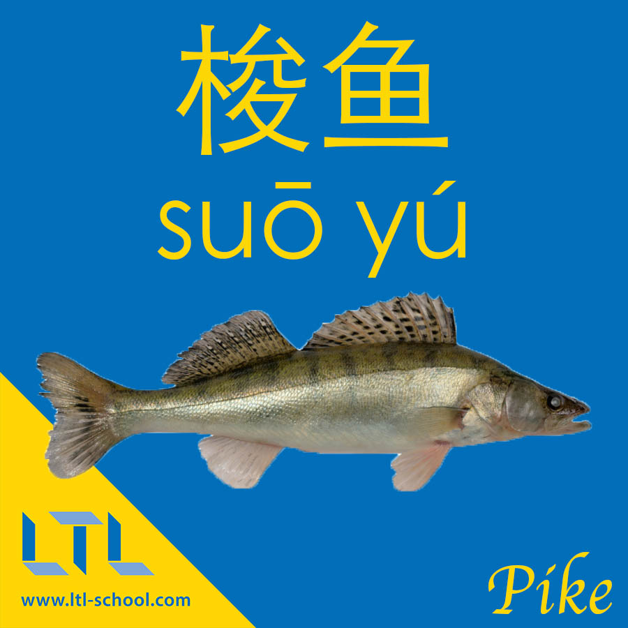 Pike in Chinese