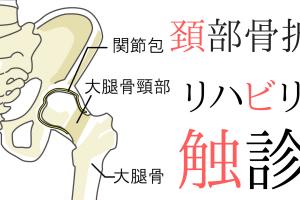 【整形外科疾患シリーズ】大腿骨頸部骨折のリハビリって?評価とアプローチ~触診編~
