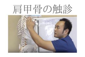 肩甲骨の触診