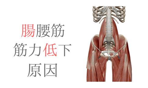 腸腰筋の筋力低下の要因を骨盤の動きから考えてみた