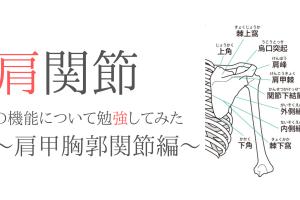 肩関節の機能と解剖、評価について勉強してみた〜肩甲胸郭関節編〜