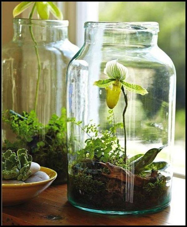 jardins-no-vidro
