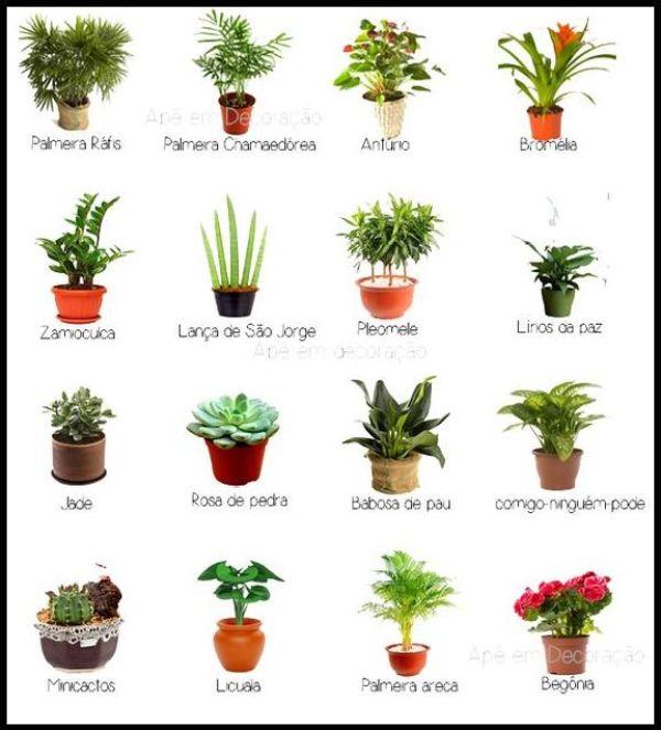 nomes-das-plantas