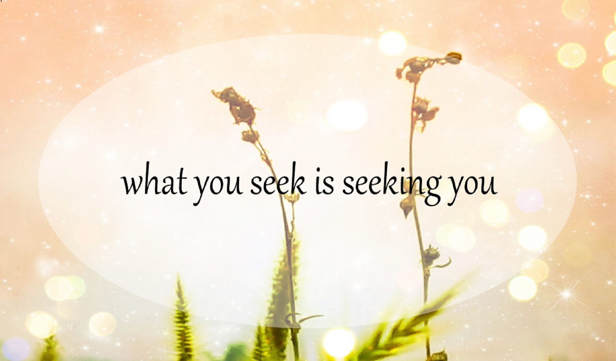 Image result for What you seek is seeking you